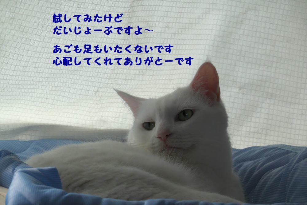 b0061787_15581176.jpg