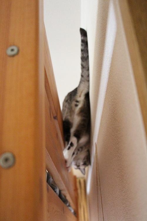 家の中の猫道_a0333195_16375113.jpg
