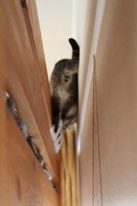 家の中の猫道_a0333195_16415209.jpg