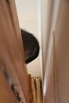 家の中の猫道_a0333195_16415701.jpg