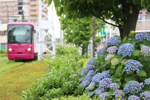 紫陽花の季節_b0298605_00093690.jpg