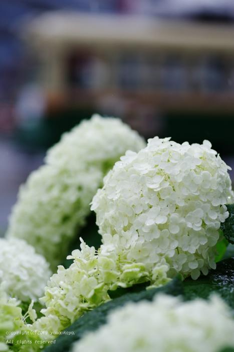 白い紫陽花の交差点_d0309612_21282036.jpg