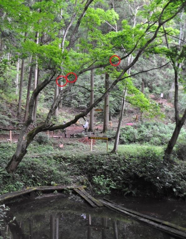 2019年6月9日 椎茸原木の本伏せ 玉ねぎの収穫_d0053832_11284308.jpg
