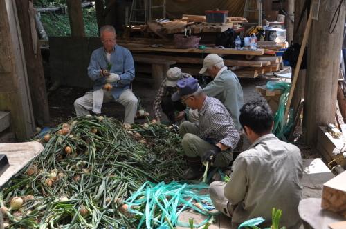 2019年6月9日 椎茸原木の本伏せ 玉ねぎの収穫_d0053832_11455779.jpg