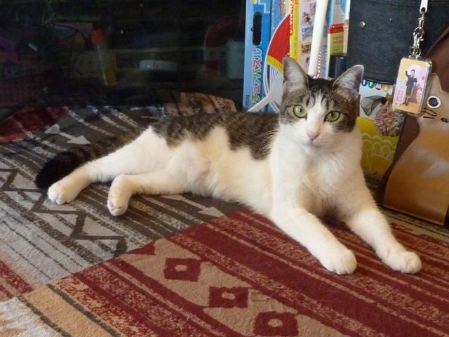 猫のお留守番 はなちゃん編。_a0143140_00031426.jpg
