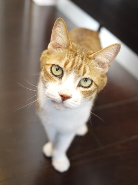 猫のお留守番 ウィンクくん編。_a0143140_00182088.jpg
