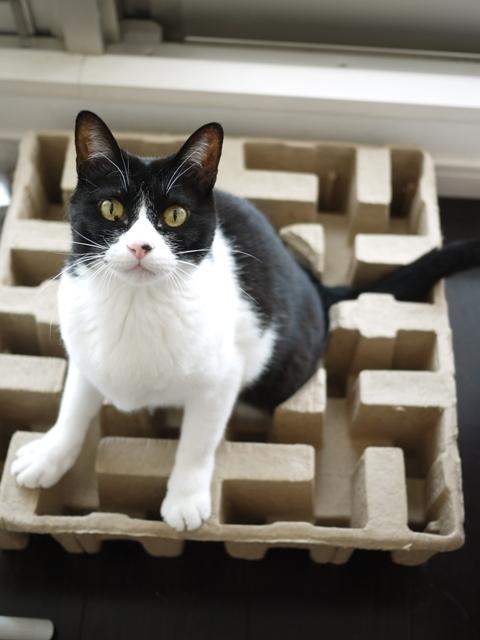 猫のお留守番 ピケちゃん編。_a0143140_00241983.jpg