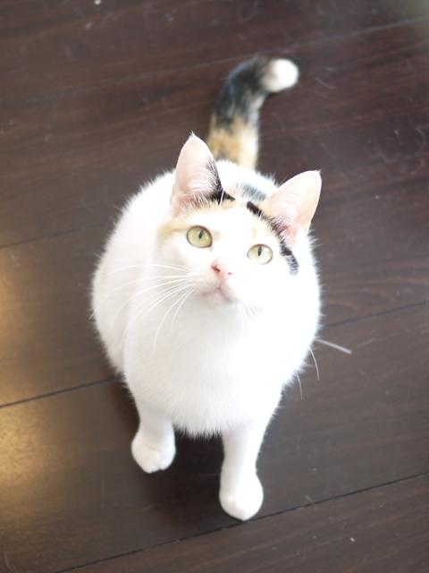 猫のお留守番 エンジェルちゃん編。_a0143140_00270698.jpg
