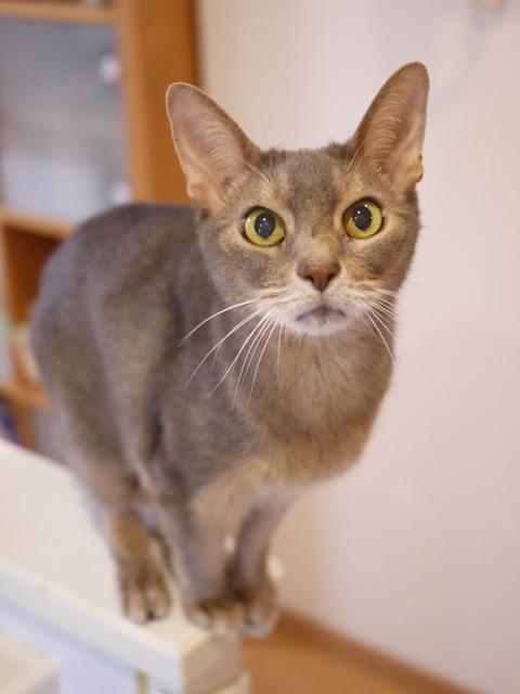 猫のお留守番 庄九朗くん編。_a0143140_00310047.jpg