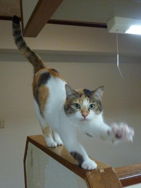 猫のお留守番 みーちゃん編。_a0143140_22523399.jpg