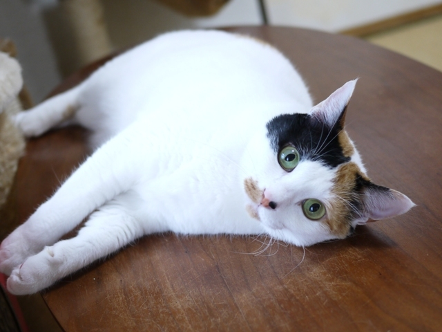 猫のお留守番 ちびちゃん編。_a0143140_22583584.jpg