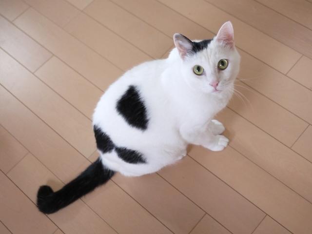 猫のお留守番 たらくん編。_a0143140_23101828.jpg