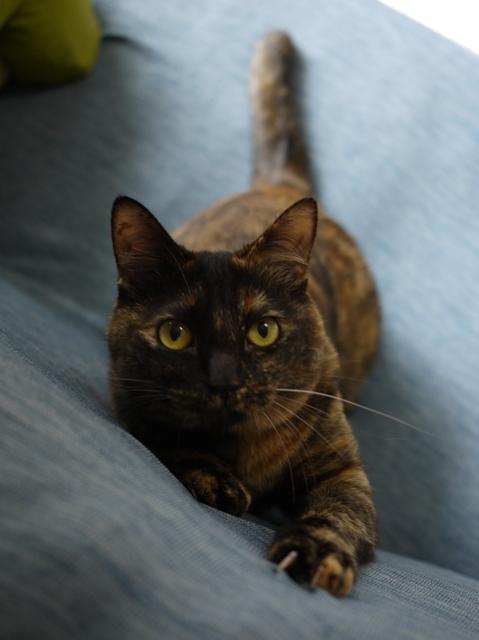 猫のお留守番 ぴーこちゃん編。_a0143140_23212785.jpg