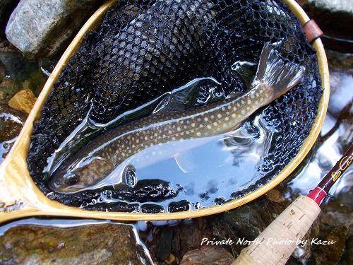 昨日の釣り_d0261148_19461333.jpg