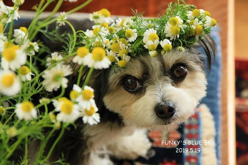 庭の小さなブーケ** (続・5月19日)_c0145250_12053007.jpg