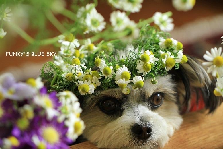 庭の小さなブーケ** (続・5月19日)_c0145250_12054944.jpg