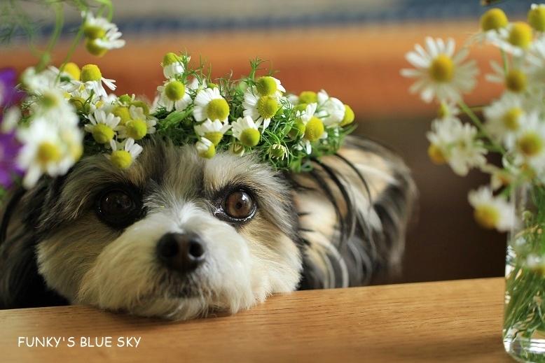 庭の小さなブーケ** (続・5月19日)_c0145250_12055271.jpg
