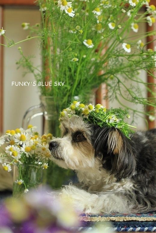 庭の小さなブーケ** (続・5月19日)_c0145250_12055573.jpg
