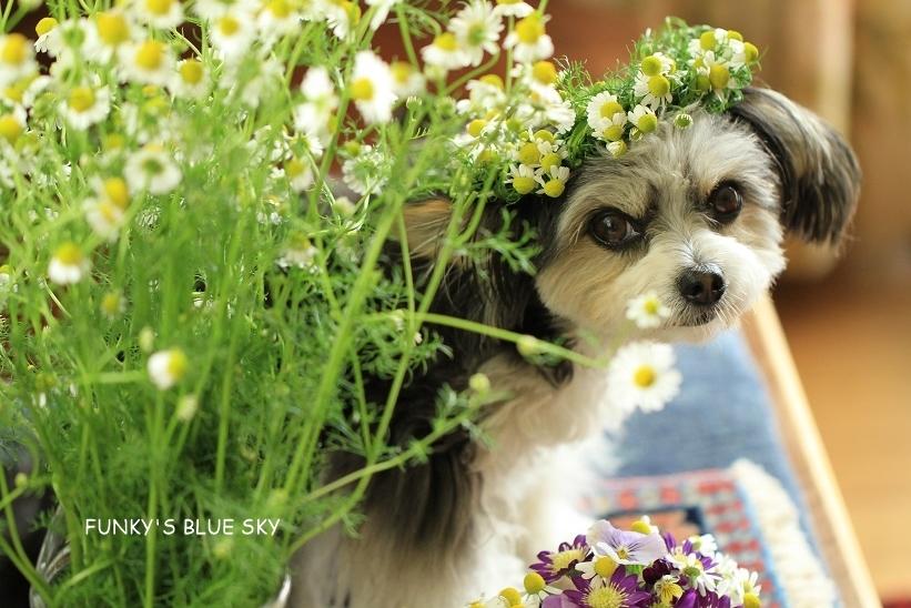 庭の小さなブーケ** (続・5月19日)_c0145250_12060607.jpg
