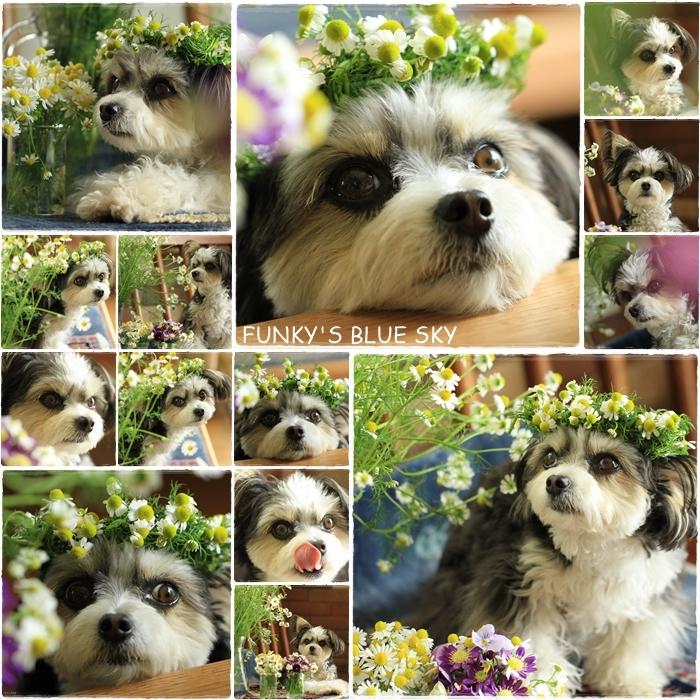 庭の小さなブーケ** (続・5月19日)_c0145250_12063157.jpg