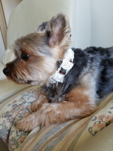 犬・猫おしゃれ首輪を作る_d0034659_00151847.jpg