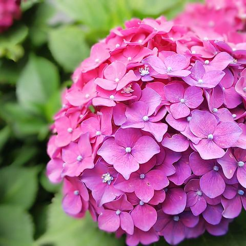 雨上がりの紫陽花~2019_f0043559_18301493.jpg