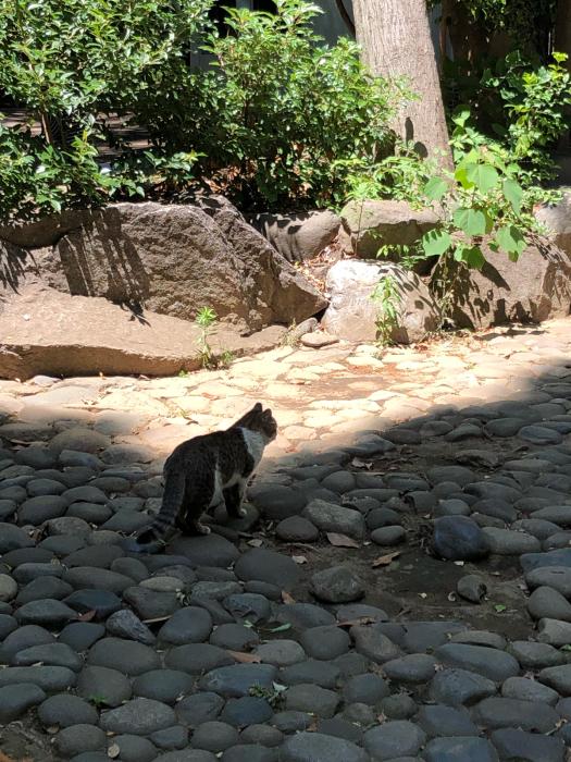 ぶらりお散歩♪代々木八幡〜新宿まで_d0152261_20532153.jpg