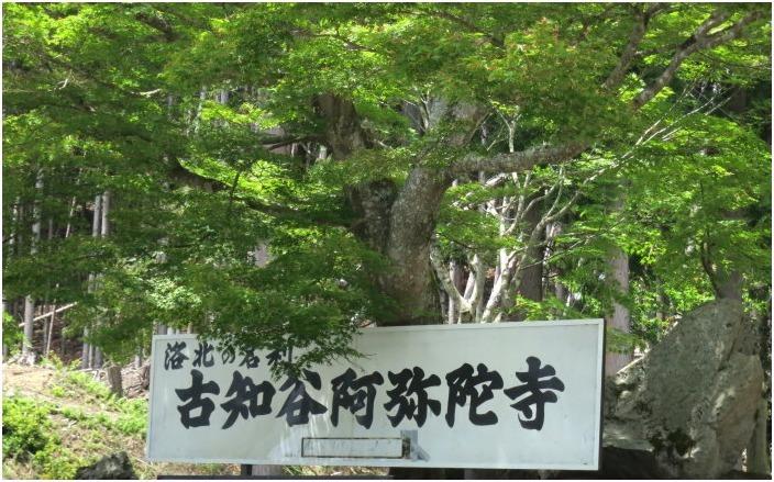 < 古知谷 阿弥陀寺(こちだに あみだじ) >_c0036080_11540663.jpg