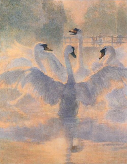 クリスチャン・バーミンガム画の野の白鳥から_c0084183_1748252.jpg