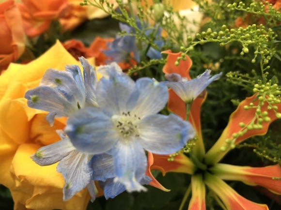 元気の出る黄色の花_d0030894_16575484.jpg