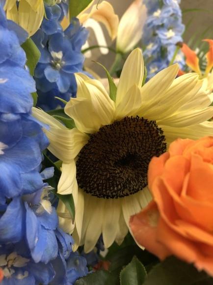 元気の出る黄色の花_d0030894_16580056.jpg