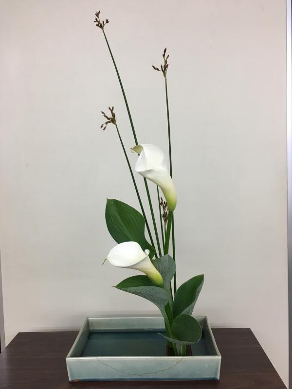 お茶花、盛花のお稽古_c0195496_17344381.jpg