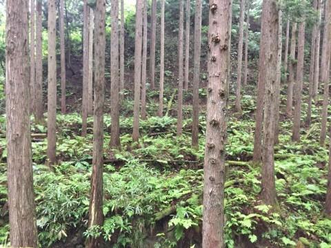 河合谷高原・水とのふれあい広場の水 ・田村牧場_e0115904_13065542.jpg