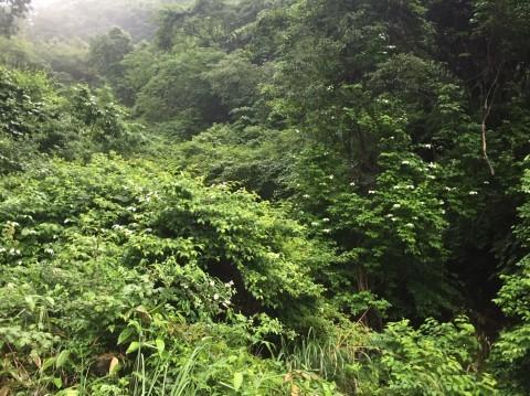 河合谷高原・水とのふれあい広場の水 ・田村牧場_e0115904_13082660.jpg