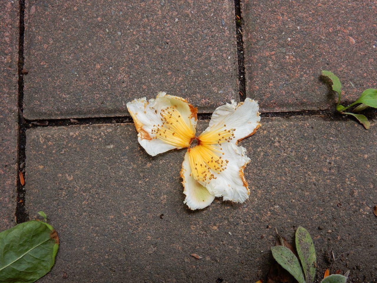 花落ちてナツツバキの季節が始まったことを知る_c0025115_21582583.jpg
