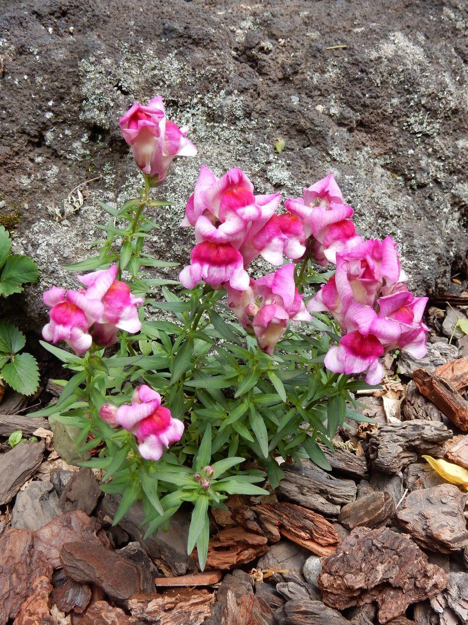 花落ちてナツツバキの季節が始まったことを知る_c0025115_22100939.jpg