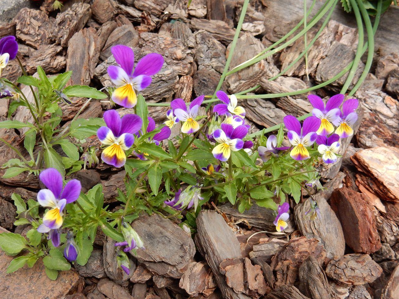 花落ちてナツツバキの季節が始まったことを知る_c0025115_22101242.jpg