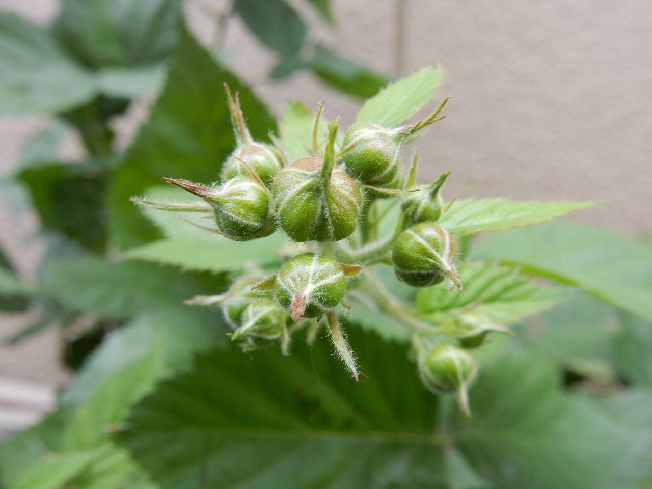 花落ちてナツツバキの季節が始まったことを知る_c0025115_22102237.jpg