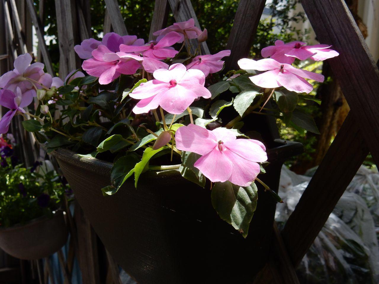 花落ちてナツツバキの季節が始まったことを知る_c0025115_22102599.jpg