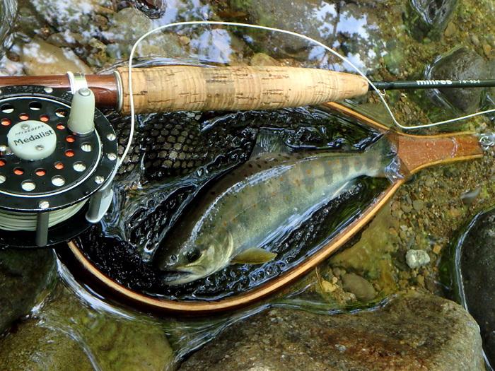 長男、谷でアマゴを釣る_c0120834_16383625.jpg