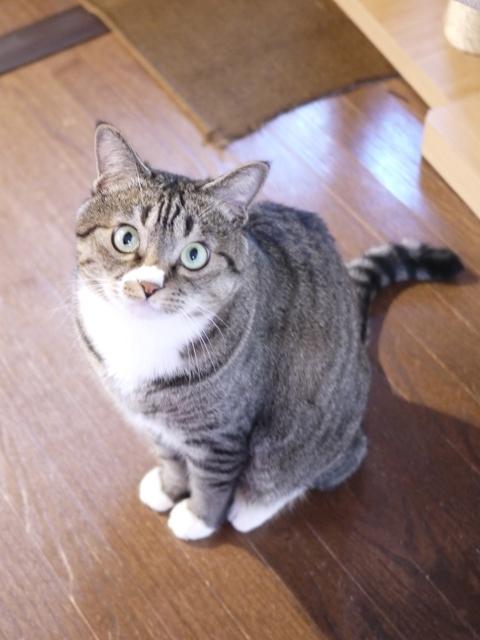 猫のお留守番 らんまるくん編。_a0143140_21354807.jpg