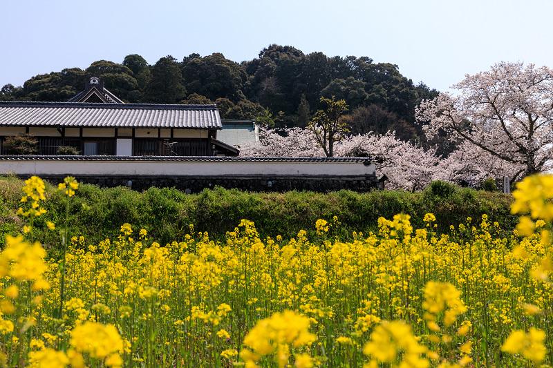 桜咲く奈良2019 橘寺の春_f0155048_23512964.jpg