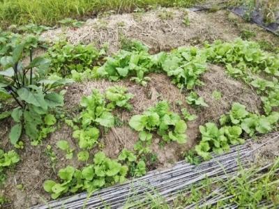 やっと玉ねぎジャガイモ収穫終了・・・南国畑_c0330749_17335087.jpg