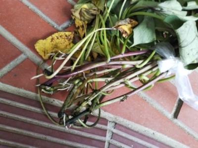 やっと玉ねぎジャガイモ収穫終了・・・南国畑_c0330749_17375602.jpg
