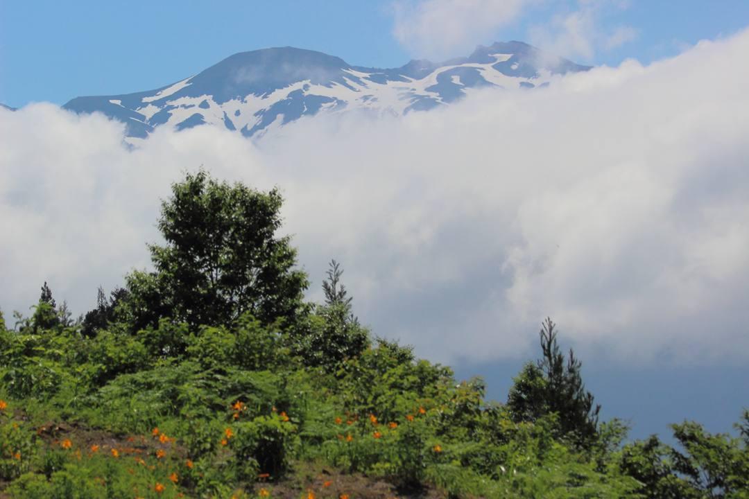 白山高山植物園・前編_e0403850_11175181.jpg