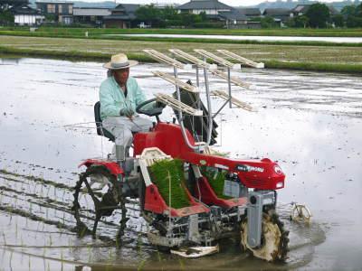 無農薬栽培の発芽玄米、雑穀米、米粉大好評発売中!「健康農園」さんの令和元年度の米作り!苗床の様子!_a0254656_17560548.jpg