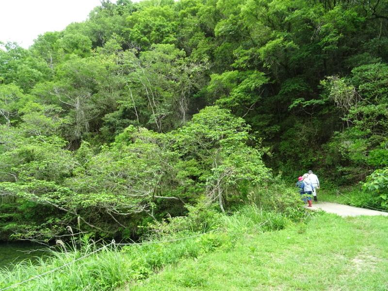 階段補修・草刈り・間伐 里山作業の継続・・・孝子の森_c0108460_18311492.jpg
