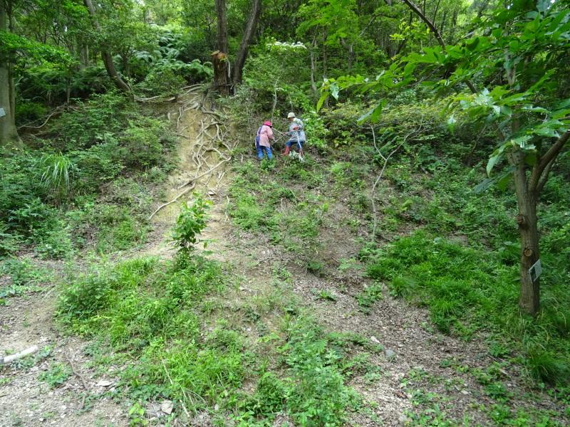 階段補修・草刈り・間伐 里山作業の継続・・・孝子の森_c0108460_18335755.jpg