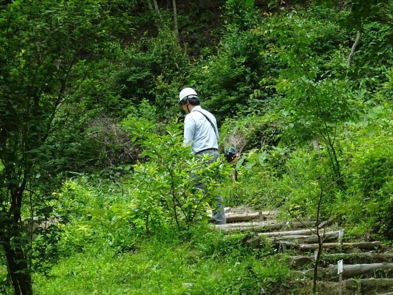 階段補修・草刈り・間伐 里山作業の継続・・・孝子の森_c0108460_18390864.jpg