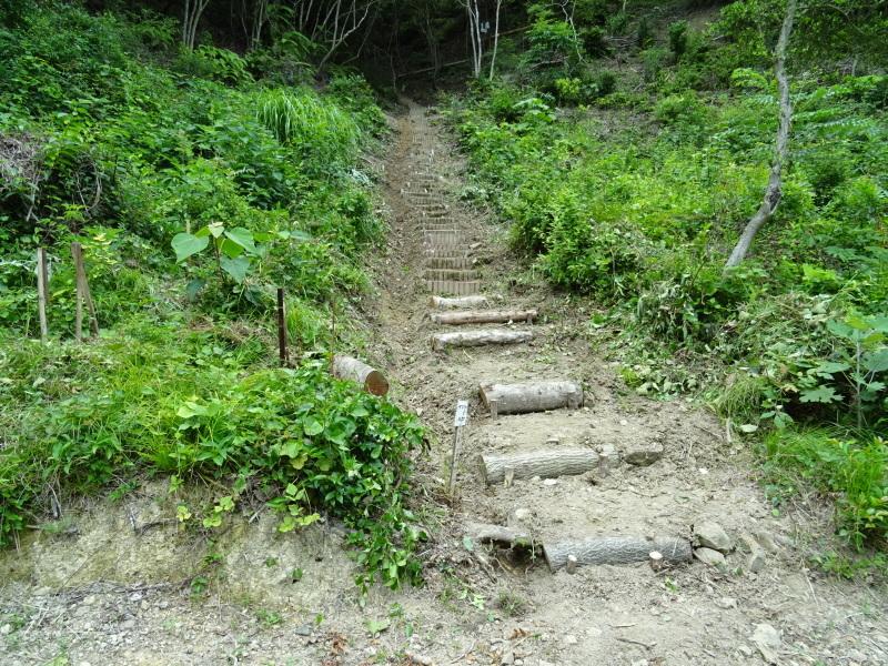 階段補修・草刈り・間伐 里山作業の継続・・・孝子の森_c0108460_18443231.jpg